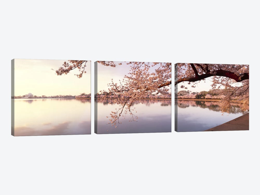 Cherry blossoms at the lakeside, Washington DC, USA by Panoramic Images 3-piece Art Print