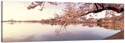 Cherry blossoms at the lakeside, Washington DC, USA Canvas Art Print