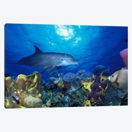 Bottle-Nosed dolphin (Tursiops truncatus) and Gray angelfish (Pomacanthus arcuatus) on coral reef in the sea Canvas Print #PIM7684} by Panoramic Images Canvas Wall Art