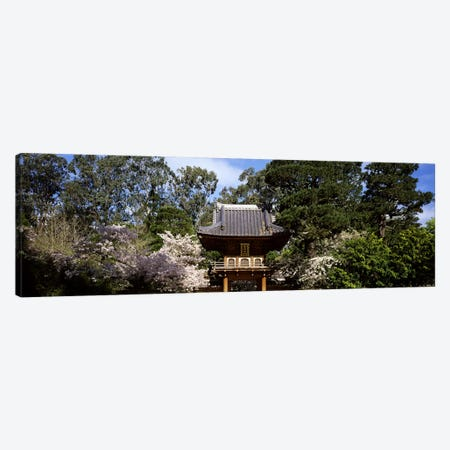 Cherry Blossom trees in a garden, Japanese Tea Garden, Golden Gate Park, San Francisco, California, USA Canvas Print #PIM7723} by Panoramic Images Canvas Artwork
