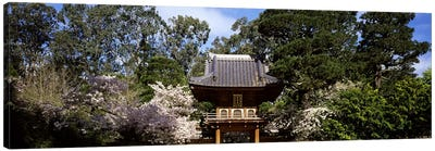 Cherry Blossom trees in a garden, Japanese Tea Garden, Golden Gate Park, San Francisco, California, USA Canvas Print #PIM7723