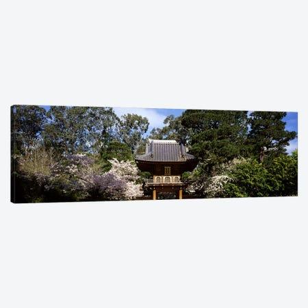 Cherry Blossom trees in a garden, Japanese Tea Garden, Golden Gate Park, San Francisco, California, USA Canvas Print #PIM7723} by Panoramic Images Canvas Artwork