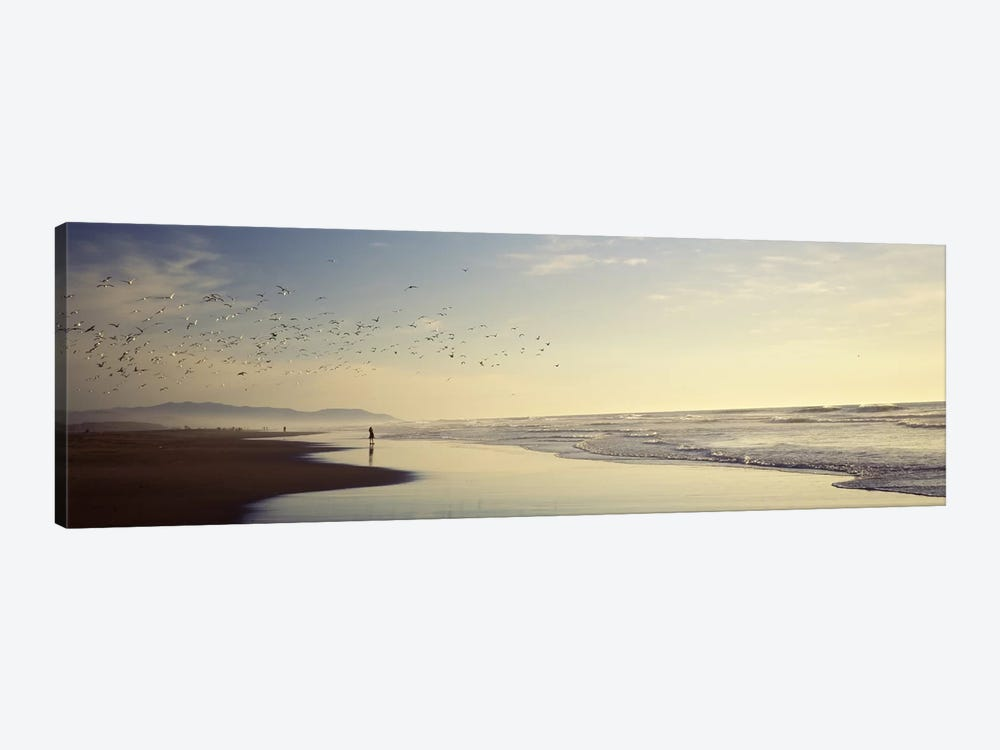 Flock of seagulls flying above a woman on the beach, San Francisco, California, USA 1-piece Canvas Wall Art