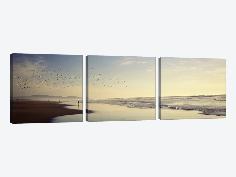 Flock of seagulls flying above a woman on the beach, San Francisco, California, USA 3-piece Canvas Wall Art