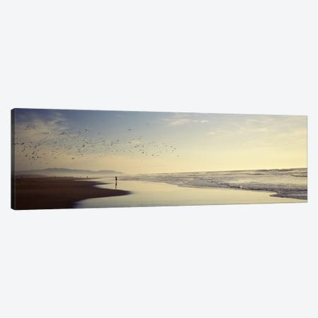 Flock of seagulls flying above a woman on the beach, San Francisco, California, USA Canvas Print #PIM7734} by Panoramic Images Canvas Art