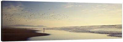 Flock of seagulls flying above a woman on the beach, San Francisco, California, USA Canvas Art Print