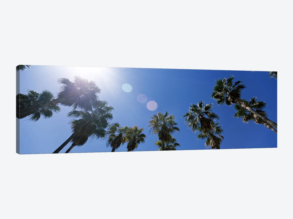 Low angle view of palm trees, Downtown San Jose, San Jose, Santa Clara County, California, USA by Panoramic Images 1-piece Canvas Wall Art