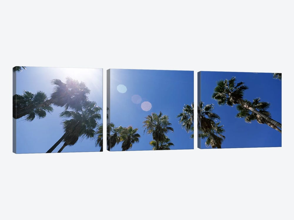 Low angle view of palm trees, Downtown San Jose, San Jose, Santa Clara County, California, USA by Panoramic Images 3-piece Canvas Art