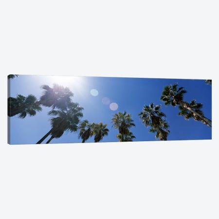 Low angle view of palm trees, Downtown San Jose, San Jose, Santa Clara County, California, USA Canvas Print #PIM7769} by Panoramic Images Canvas Wall Art