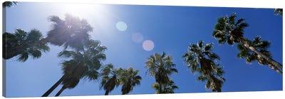 Low angle view of palm trees, Downtown San Jose, San Jose, Santa Clara County, California, USA Canvas Art Print
