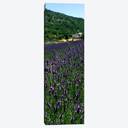 Lavender crop with a monastery in the backgroundAbbaye De Senanque, Provence-Alpes-Cote d'Azur, France Canvas Print #PIM7775} by Panoramic Images Canvas Art
