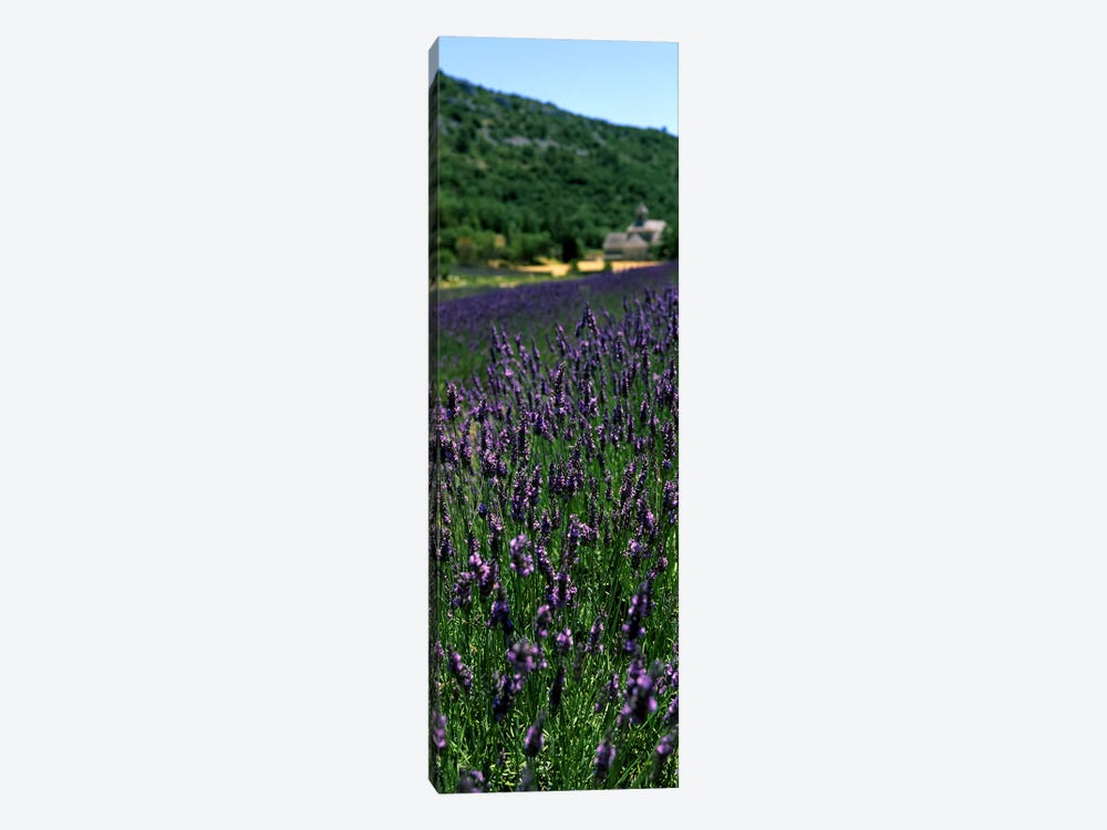 Lavender crop with a monastery in the backgroundAbbaye De Senanque, Provence-Alpes-Cote d'Azur, France 1-piece Art Print