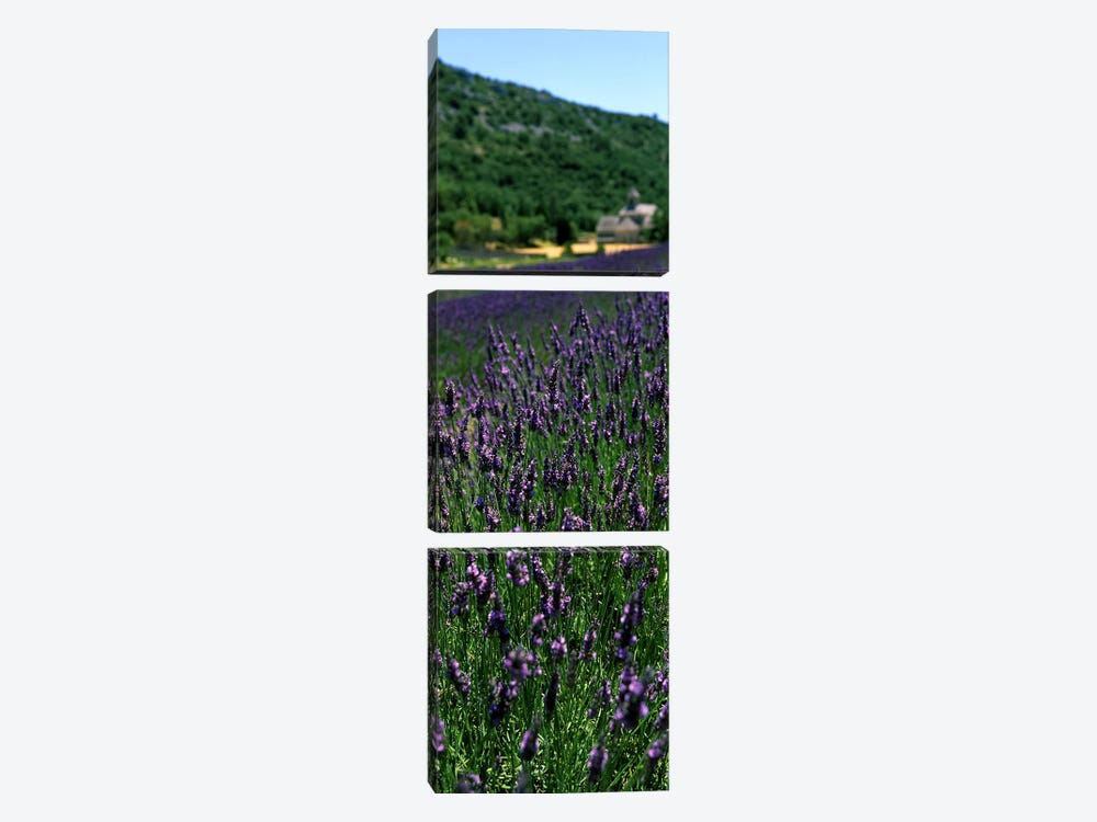 Lavender crop with a monastery in the backgroundAbbaye De Senanque, Provence-Alpes-Cote d'Azur, France by Panoramic Images 3-piece Art Print