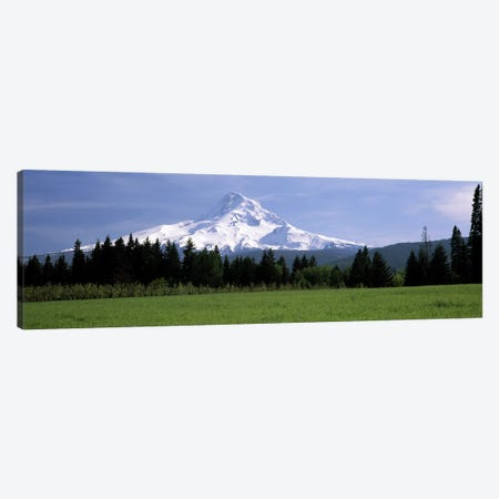 Forested Landscape With A Snow-Covered Mountt Hood (Wy'east) In The Background, Oregon, USA Canvas Print #PIM7790} by Panoramic Images Canvas Art Print