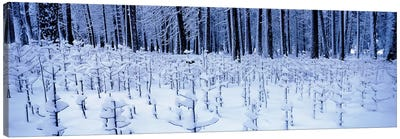 Snow covered trees on a landscape, Yosemite Valley, Yosemite National Park, Mariposa County, California, USA Canvas Art Print
