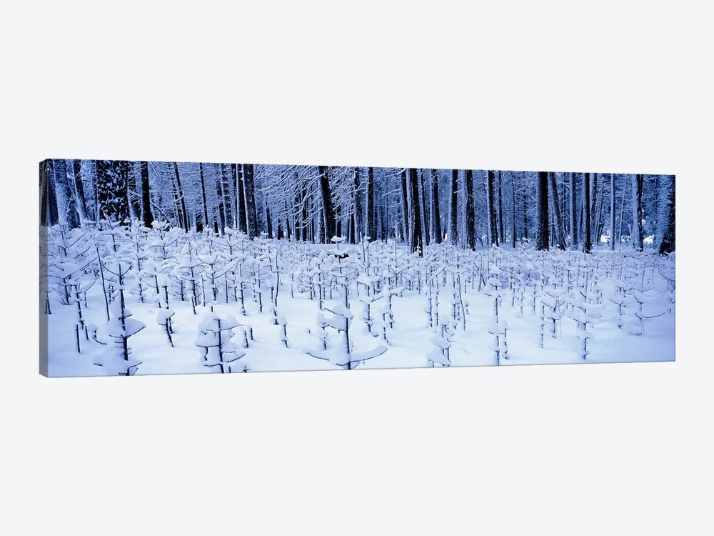 Snow covered trees on a landscape, Yosemite Valley, Yosemite National Park, Mariposa County, California, USA by Panoramic Images 1-piece Canvas Print