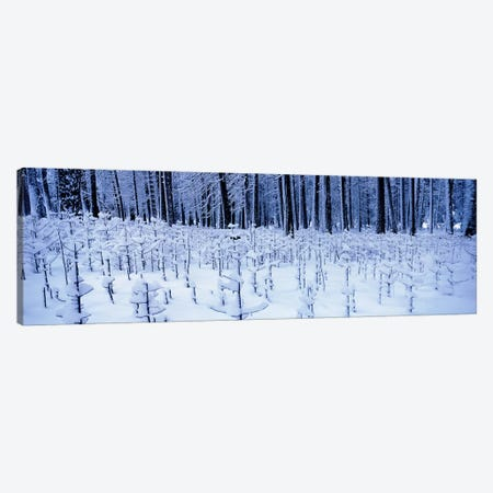 Snow covered trees on a landscape, Yosemite Valley, Yosemite National Park, Mariposa County, California, USA Canvas Print #PIM7804} by Panoramic Images Canvas Art