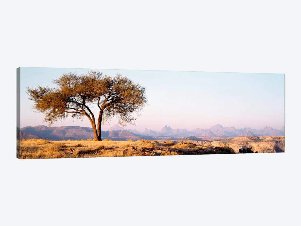 Lone Tree In An Arid Landscape, Mehakelegnaw, Tigray Region, Ethiopia by Panoramic Images 1-piece Canvas Artwork