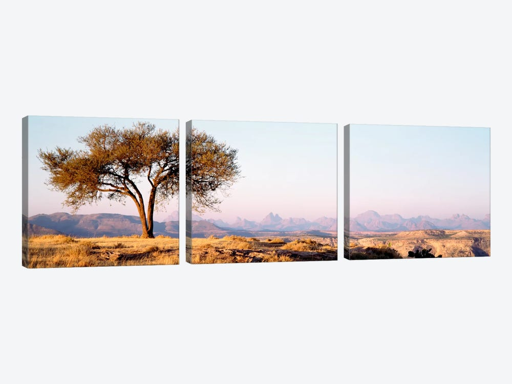 Lone Tree In An Arid Landscape, Mehakelegnaw, Tigray Region, Ethiopia by Panoramic Images 3-piece Canvas Wall Art