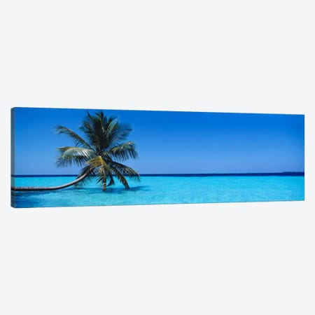 Tropical Seascape With A Lone Palm Tree, Republic Of Maldives Canvas Print #PIM796} by Panoramic Images Canvas Art Print