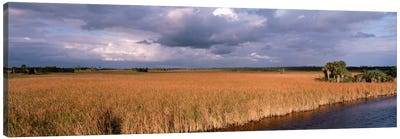 USAFlorida, Big Cypress National Preserve along Tamiami Trail Everglades National Park Canvas Art Print