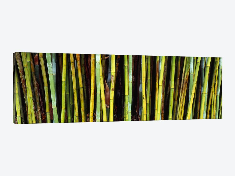 Bamboo trees in a botanical garden, Kanapaha Botanical Gardens, Gainesville, Alachua County, Florida, USA by Panoramic Images 1-piece Canvas Wall Art