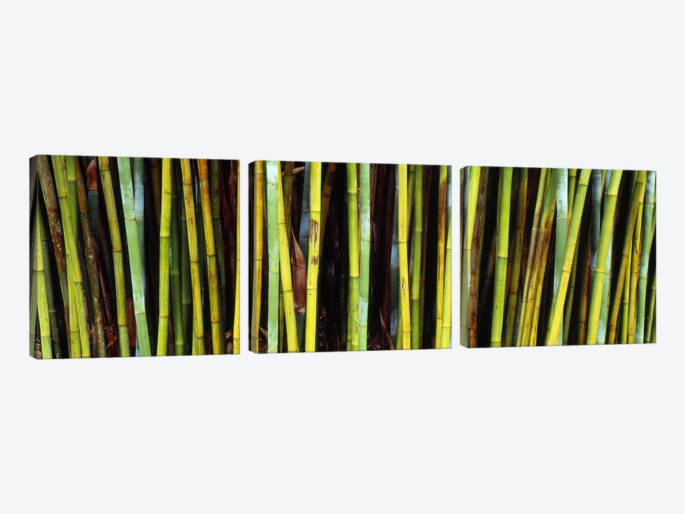 Bamboo trees in a botanical garden, Kanapaha Botanical Gardens, Gainesville, Alachua County, Florida, USA by Panoramic Images 3-piece Canvas Wall Art