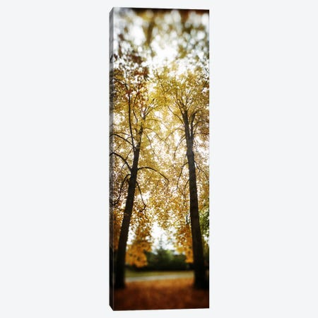 Autumn trees in a parkVolunteer Park, Capitol Hill, Seattle, King County, Washington State, USA Canvas Print #PIM8061} by Panoramic Images Canvas Print