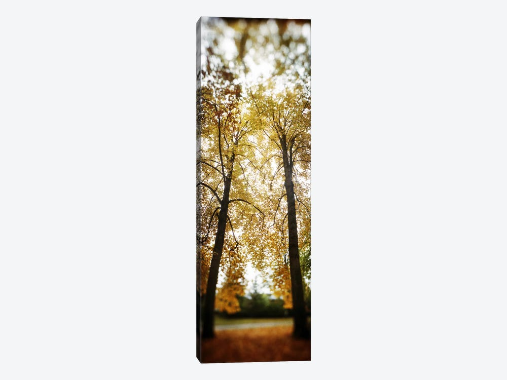 Autumn trees in a parkVolunteer Park, Capitol Hill, Seattle, King County, Washington State, USA by Panoramic Images 1-piece Canvas Art