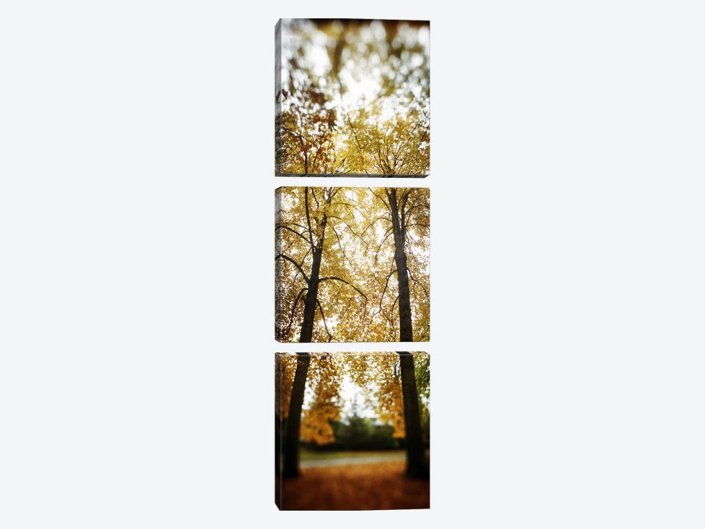 Autumn trees in a parkVolunteer Park, Capitol Hill, Seattle, King County, Washington State, USA by Panoramic Images 3-piece Canvas Art