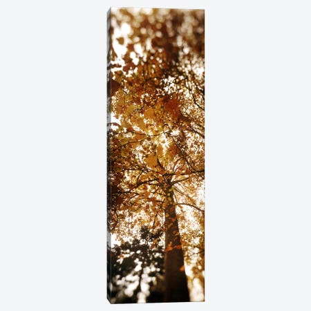 Low angle view of autumn treesVolunteer Park, Capitol Hill, Seattle, King County, Washington State, USA Canvas Print #PIM8062} by Panoramic Images Canvas Print