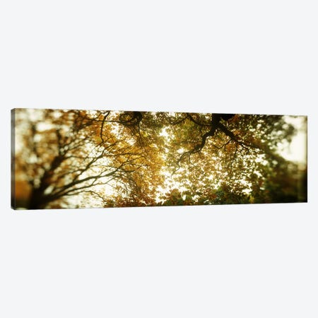 Low angle view of autumn treesVolunteer Park, Capitol Hill, Seattle, King County, Washington State, USA Canvas Print #PIM8063} by Panoramic Images Canvas Art Print