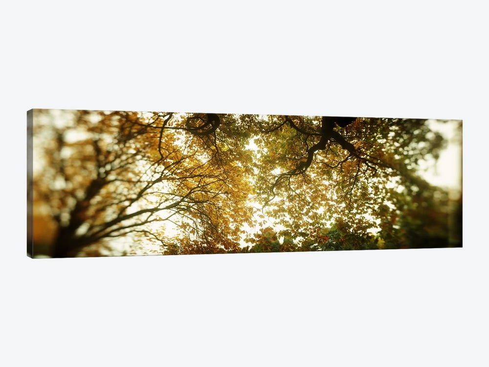 Low angle view of autumn treesVolunteer Park, Capitol Hill, Seattle, King County, Washington State, USA by Panoramic Images 1-piece Canvas Art