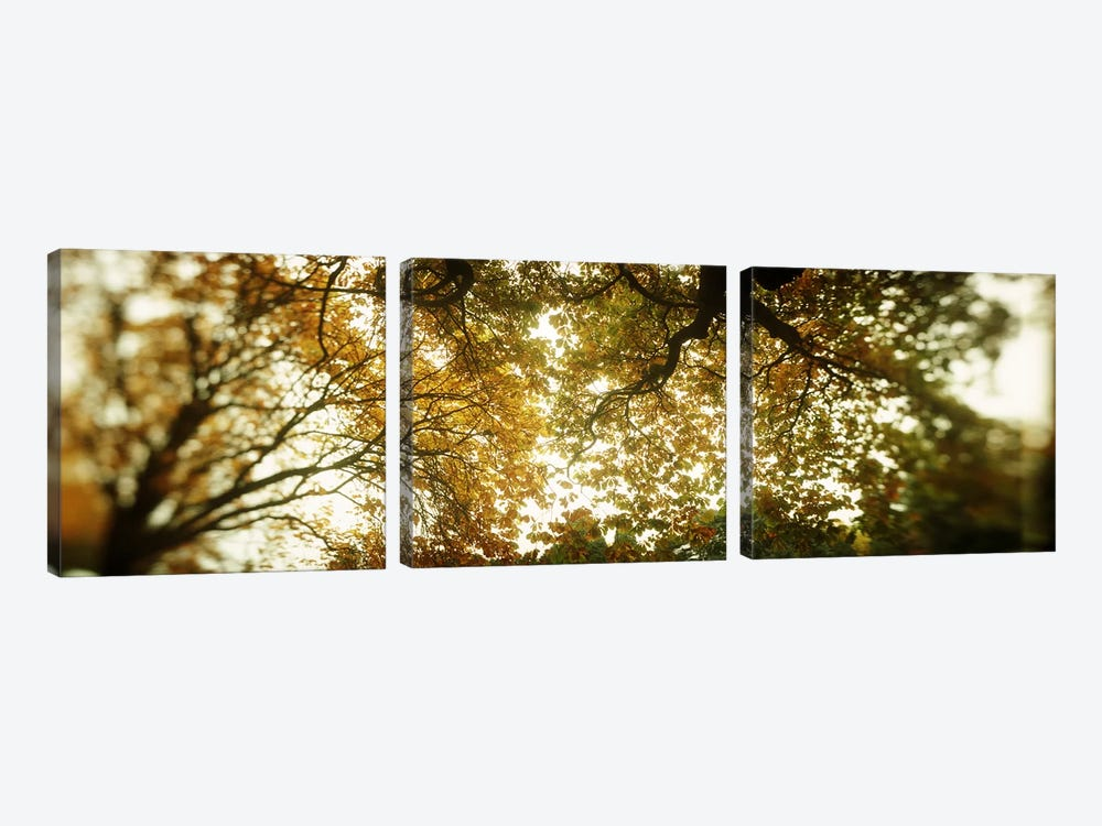 Low angle view of autumn treesVolunteer Park, Capitol Hill, Seattle, King County, Washington State, USA by Panoramic Images 3-piece Canvas Wall Art