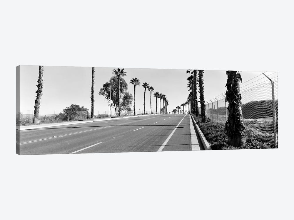 Palm trees along a roadSan Diego, California, USA by Panoramic Images 1-piece Art Print
