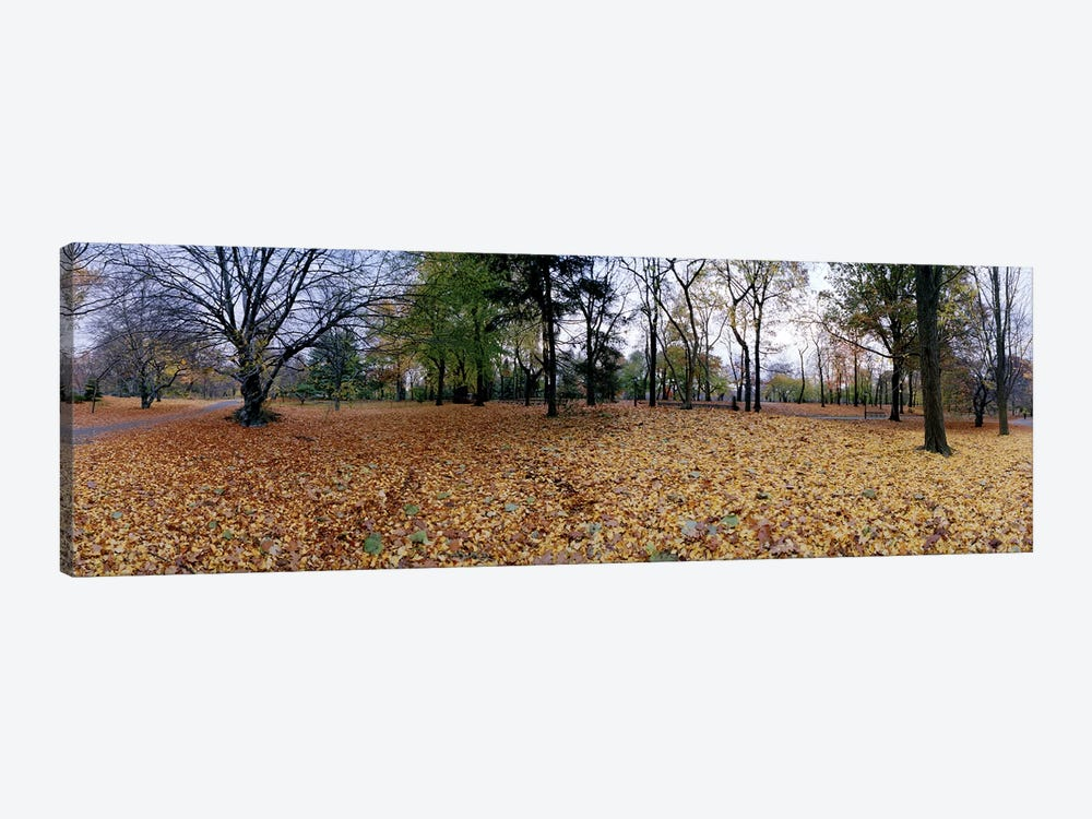 360 degree view of an urban park, Central Park, Manhattan, New York City, New York State, USA by Panoramic Images 1-piece Art Print
