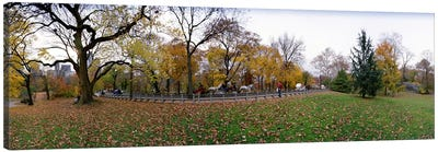 Trees in a park, Central Park, Manhattan, New York City, New York State, USA #4 Canvas Print #PIM8109
