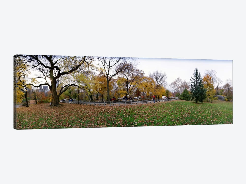 Trees in a park, Central Park, Manhattan, New York City, New York State, USA #4 by Panoramic Images 1-piece Canvas Art Print