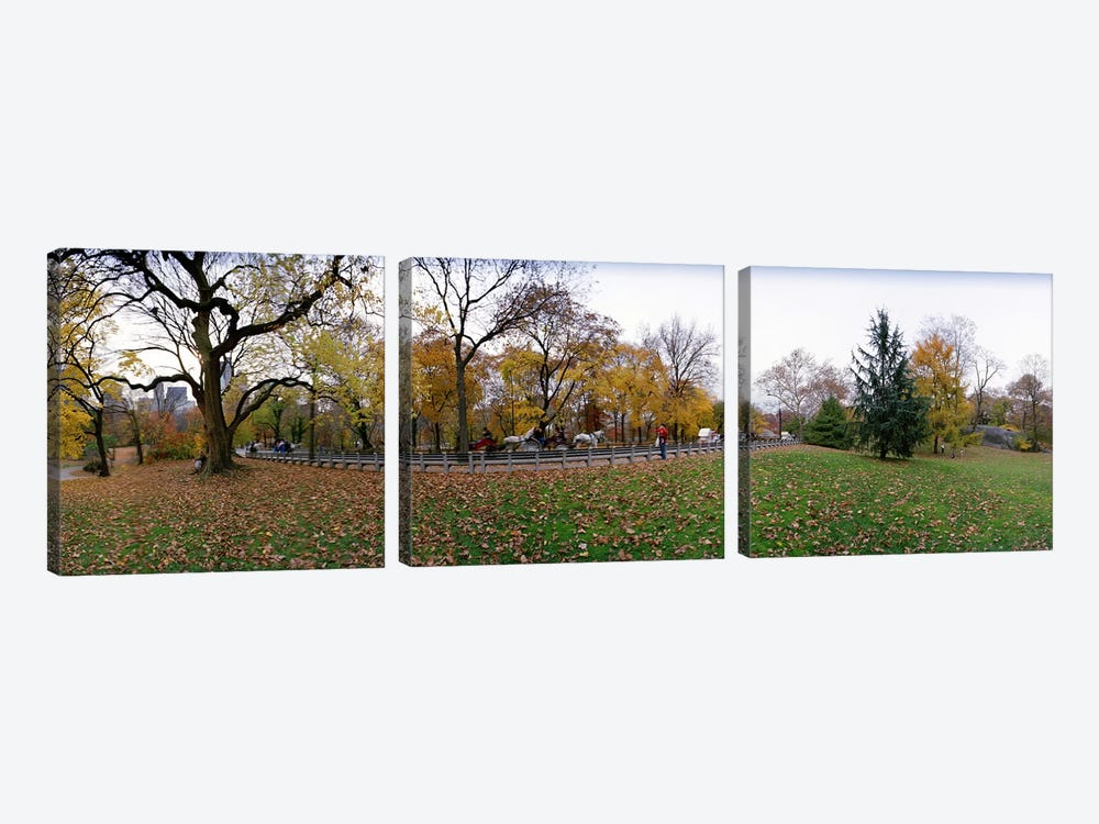Trees in a park, Central Park, Manhattan, New York City, New York State, USA #4 by Panoramic Images 3-piece Canvas Art Print