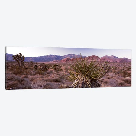 Yucca plant in a desertRed Rock Canyon, Las Vegas, Nevada, USA Canvas Print #PIM8209} by Panoramic Images Canvas Print