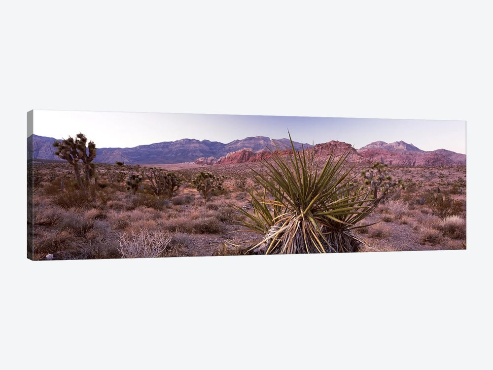 Yucca plant in a desertRed Rock Canyon, Las Vegas, Nevada, USA by Panoramic Images 1-piece Canvas Print