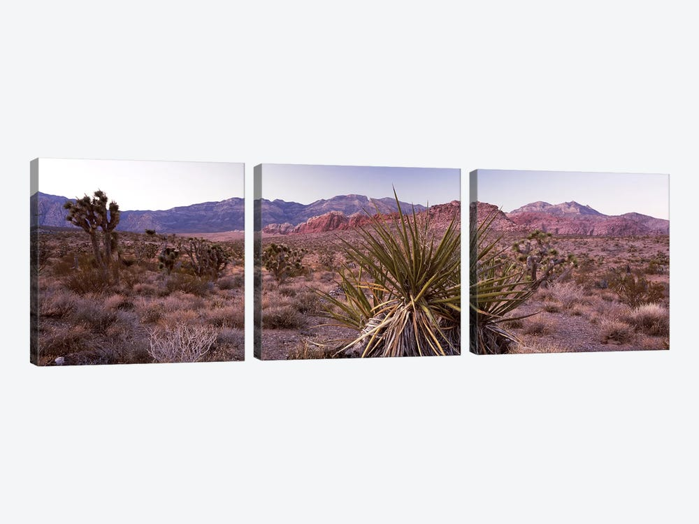 Yucca plant in a desertRed Rock Canyon, Las Vegas, Nevada, USA by Panoramic Images 3-piece Art Print