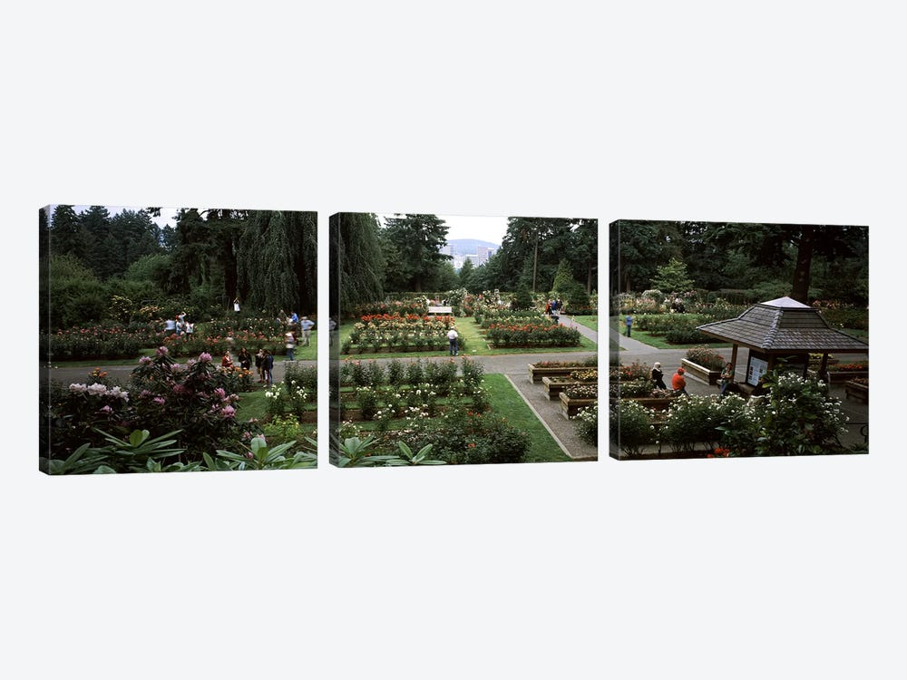 Tourists in a rose garden, International Rose Test Garden, Washington Park, Portland, Multnomah County, Oregon, USA by Panoramic Images 3-piece Canvas Artwork
