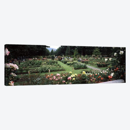 Assorted roses in a garden, International Rose Test Garden, Washington Park, Portland, Multnomah County, Oregon, USA Canvas Print #PIM8220} by Panoramic Images Canvas Print