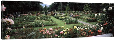 Assorted roses in a garden, International Rose Test Garden, Washington Park, Portland, Multnomah County, Oregon, USA Canvas Art Print