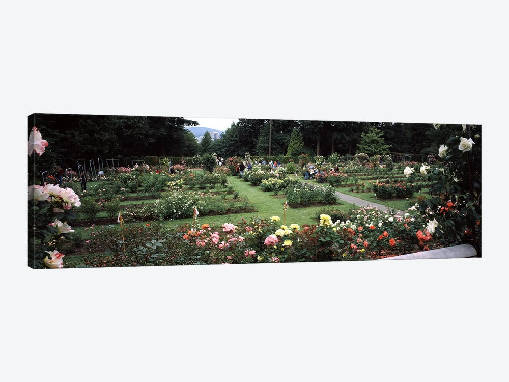 Assorted roses in a garden, International Rose Test Garden, Washington Park, Portland, Multnomah County, Oregon, USA by Panoramic Images 1-piece Canvas Art