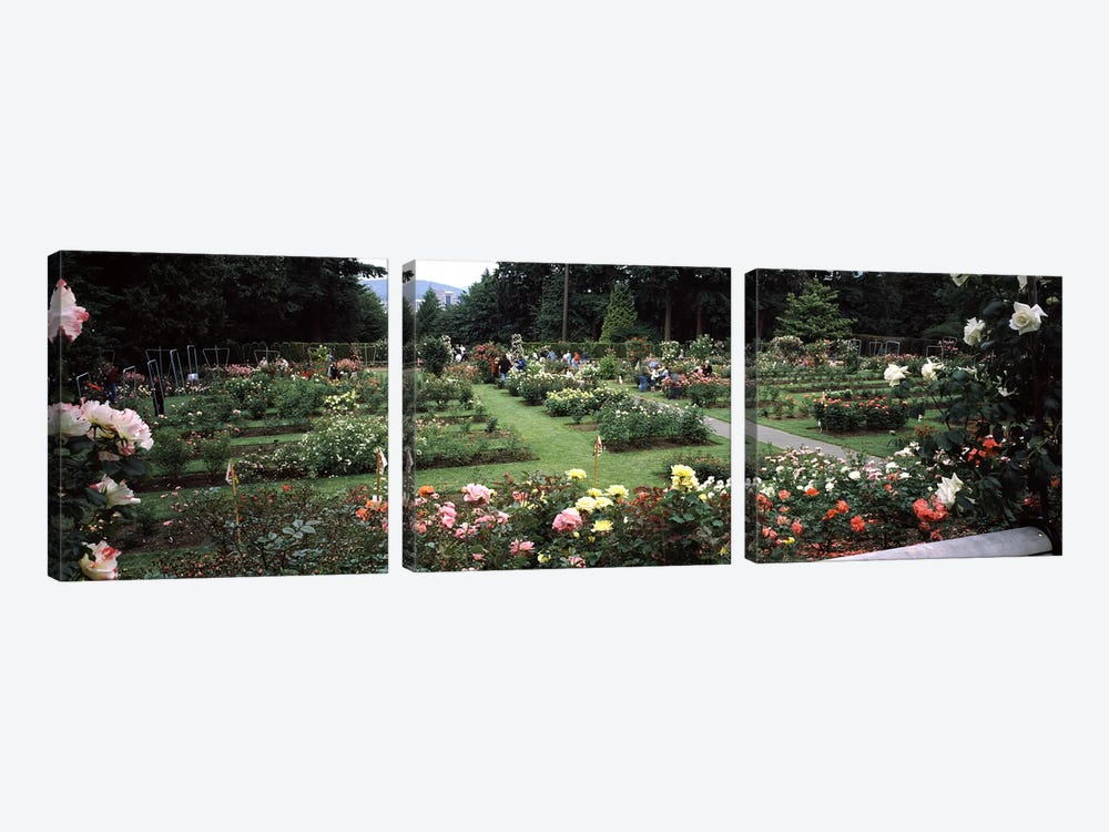 Assorted roses in a garden, International Rose Test Garden, Washington Park, Portland, Multnomah County, Oregon, USA by Panoramic Images 3-piece Canvas Wall Art