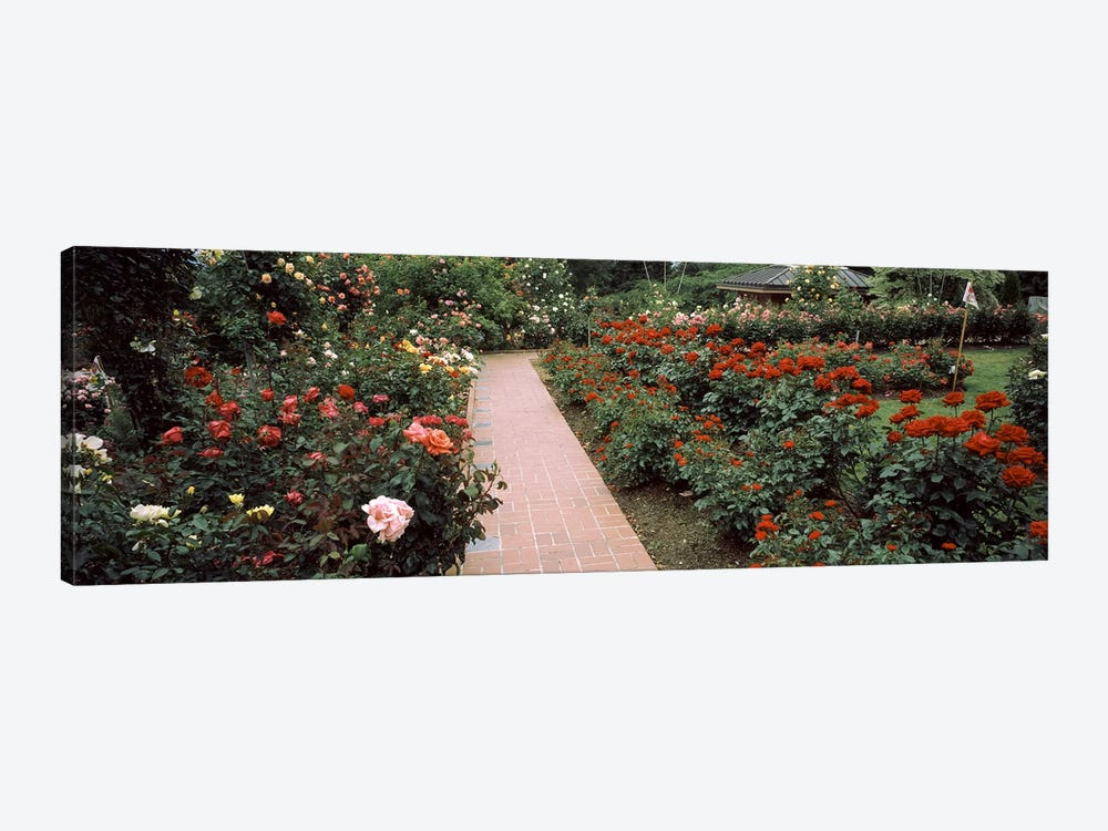 Assorted roses in a garden, International Rose Test Garden, Washington Park, Portland, Multnomah County, Oregon, USA #2 by Panoramic Images 1-piece Canvas Print