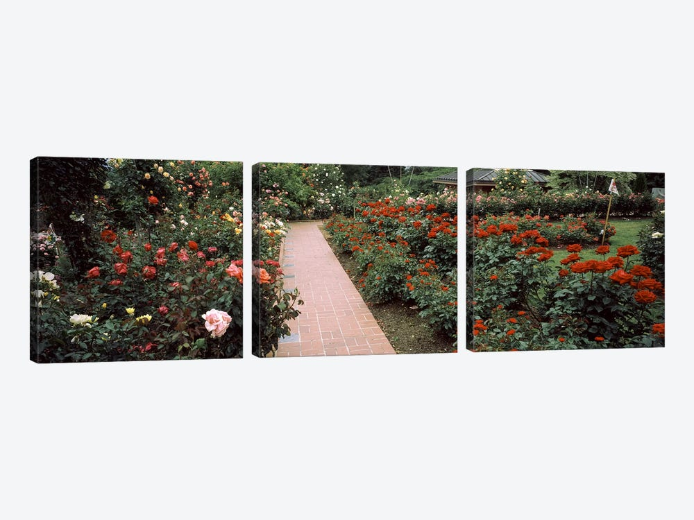 Assorted roses in a garden, International Rose Test Garden, Washington Park, Portland, Multnomah County, Oregon, USA #2 by Panoramic Images 3-piece Canvas Art Print