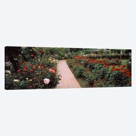 Assorted roses in a garden, International Rose Test Garden, Washington Park, Portland, Multnomah County, Oregon, USA #2 Canvas Print #PIM8221} by Panoramic Images Canvas Art Print